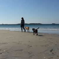 dog walk on sennen cove with Roselands caravan park St Just Cornwall