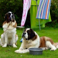 dog friendly caravan park cornwall