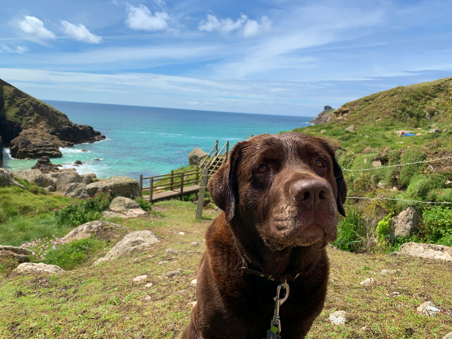 Dog on cliffs near Roselands caravan park